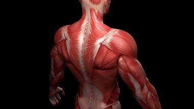 الجسم البشري و أكثر الخرافات انتشار حوله تعرف عليها