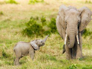 الحيوانات و أكثر الخرافات انتشارا عنها و أكيد البعض منها أنت مؤمن بها